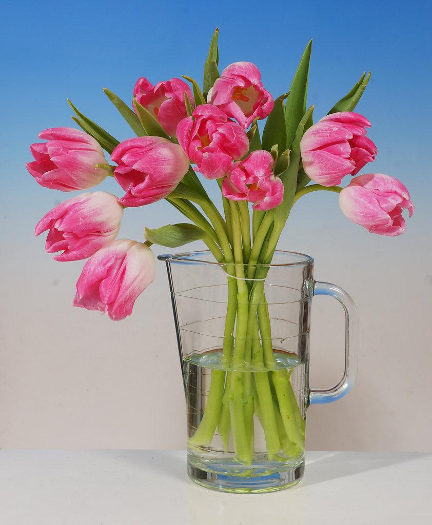 Tulpen 23