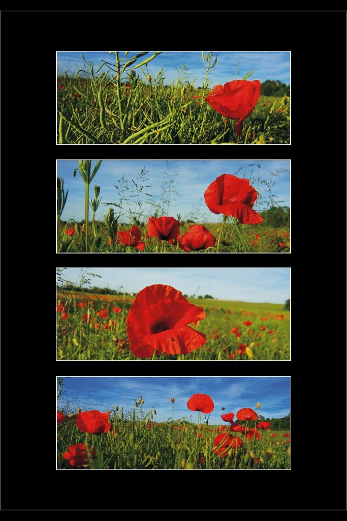 Collage Mohn 1
