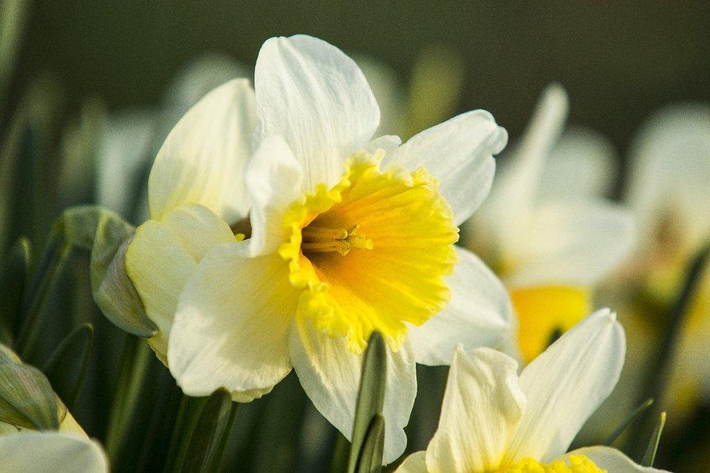Blumen 5