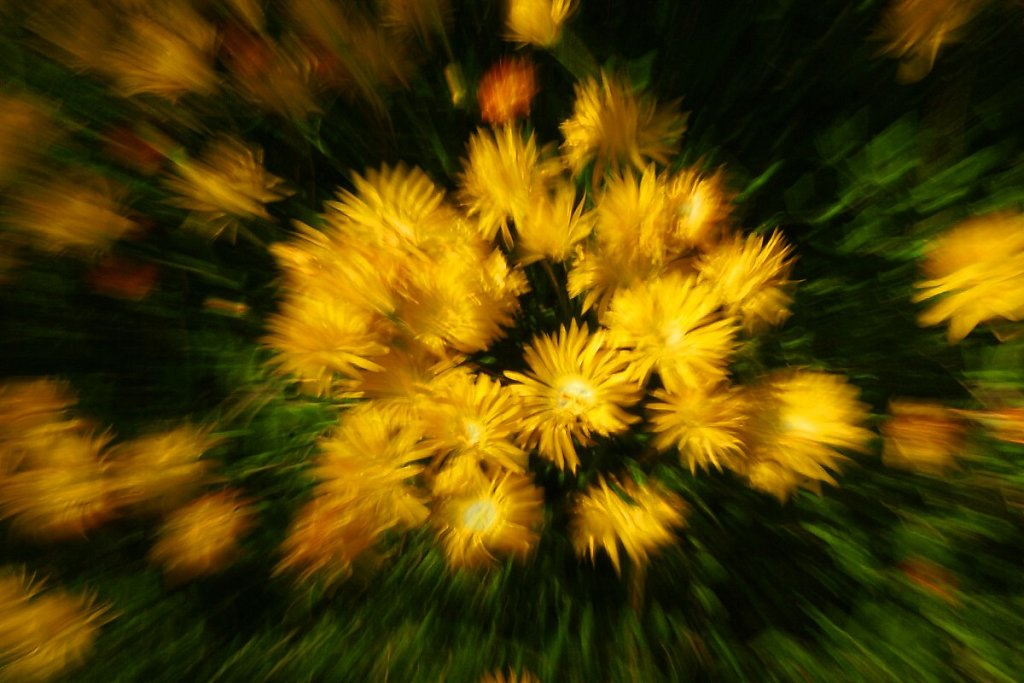Blumen 17